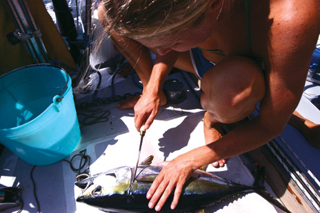 filleting-the-tuna.jpg