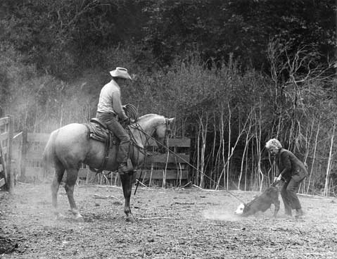 Helen Pedotti works cattle in the corral with her husband Pida.