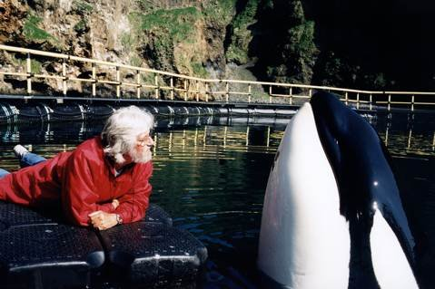 Jean-Michel Cousteau up close with Keiko of Free Willy fame at the bay pen that was constructed for Keiko in Iceland, where he continued to be rehabilitated for release into the wild.