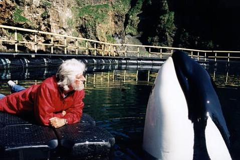 "Jean-Michel Cousteau up close with Keiko of ""Free Willy"" fame at the bay pen that was constructed for Keiko in Iceland, where he continued to be rehabilitated for release into the wild."