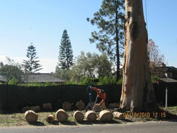 Caltrans workers remove one of the eucalyptus trees along East Valley Road