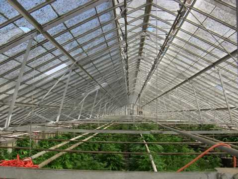 Eradication of Gaviota indoor marijuana grow.
