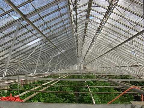 Eradication of Gaviota indoor marijuana grow.