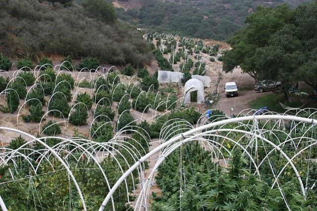 North County outdoor grow