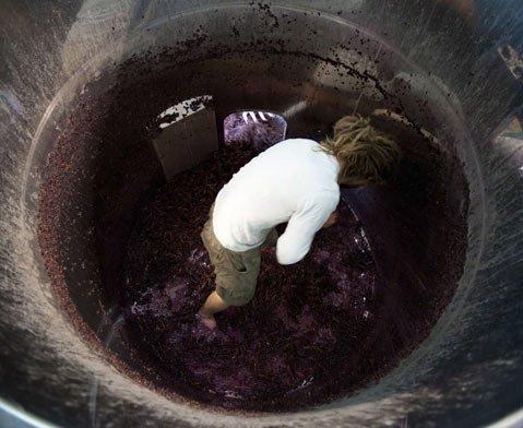 Dieter Cronje, winemaker