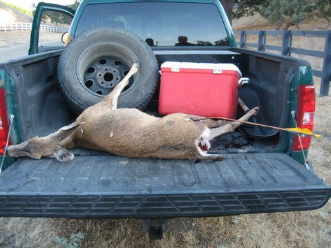 "A nursing doe allegedly shot by the ""Robin Hood"" poacher in Rancho Ynecita last year"