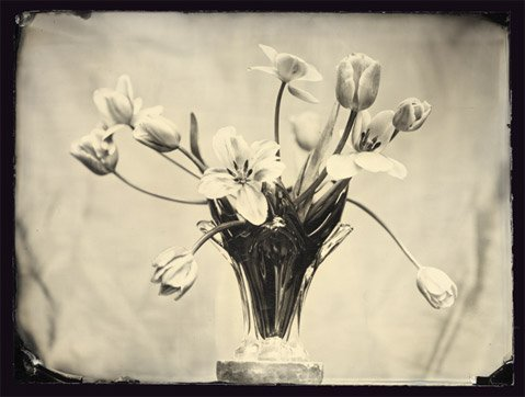 "Luther Gerlach's ""Tulips""."