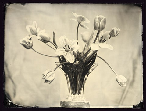 """Luther Gerlach's """"Tulips""""."""