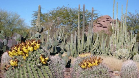 Desert Botanical Gardens