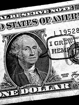 Washington Grew Hemp