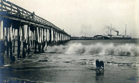 Beginning in 1888, Stearns began to replace old wharf pilings with eucalyptus.