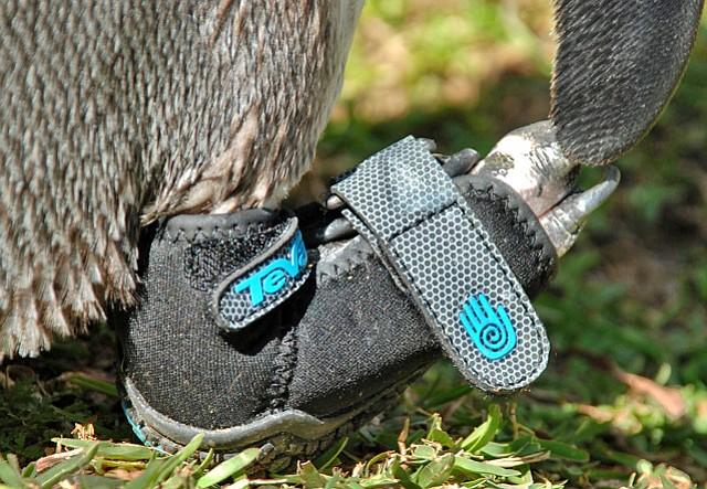 Lucky's new Teva shoe