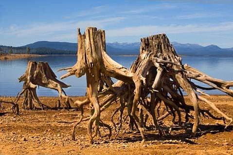 """Tree Skeletons"" by Ines Labunski Robert, part of the Trees exhibit at Wildling Art Museum through July 3."