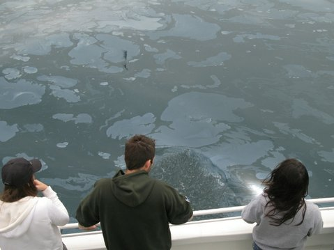 Passengers of the Condor Express check out a patch of oily ocean during Venoco's tour of Coil Oil Point