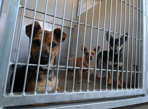 <strong>HAIRY SITUATION:</strong>  Though volunteers continue to care for animals at the county shelter,  K-9 PALS ended its formal relationship with the facility.
