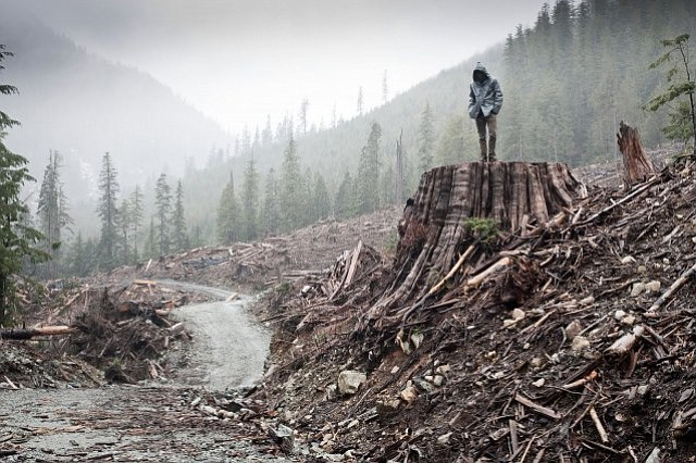 <em>If a Tree Falls</em>, Marshall Curry's film about the Earth Liberation Front, comes to UCSB on November 29.