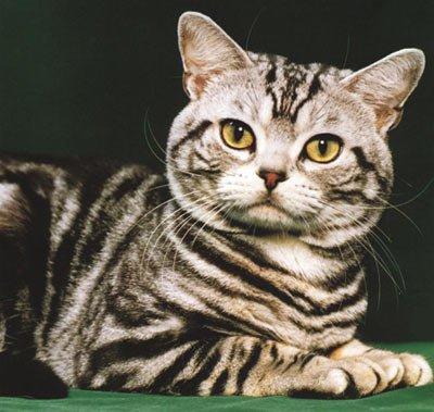 Animal Shelter Assistance Program hosts <em>Rockin' for the Kitties Concert</em> and cat adoption fair this weekend.