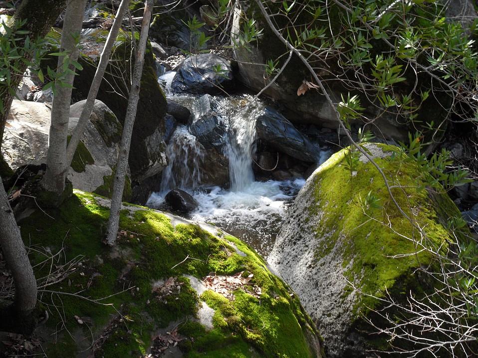 Fir Canyon Creek on Figueroa Mountain