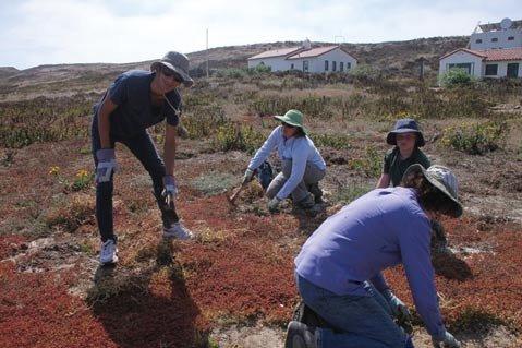Anacapa Island Volunteers
