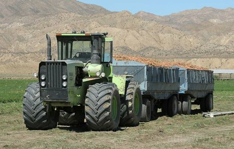 A carrot truck in Cuyama Valley heads to market