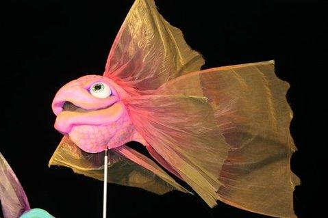 McAvene's pink fish