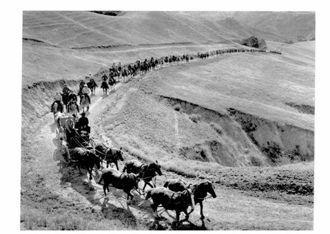 Historic photo of 19th century cattlemen who traveled between California missions driving livestock