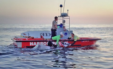 Santa Barbara Harbor Patrol rescues a horse that swam more than two miles into the ocean