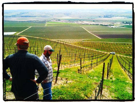 Trey Fletcher (in orange hat) and Giuseppe Bonfiglio contemplate the vines of Bien Nacido Vineyard, overlooking the Santa Maria Valley.