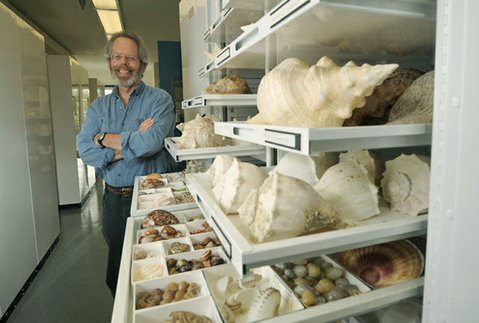 Santa Barbara Museum of Natural History Curator of Malacology, Paul Valentich-Scott