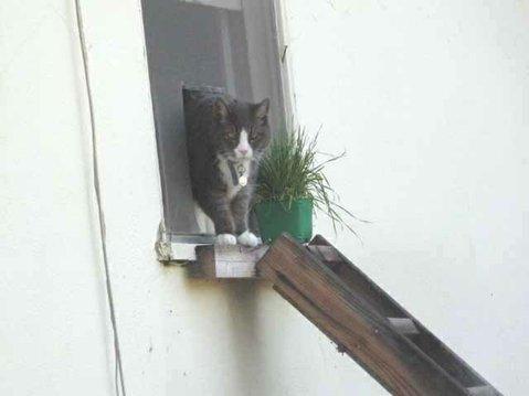 Joey in cat window.