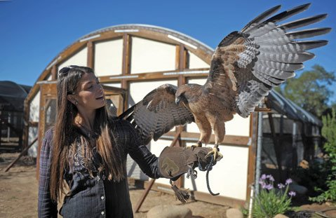 Jaclyn DeSantis of Ojai Raptor Center with Rosie the red-tailed hawk.