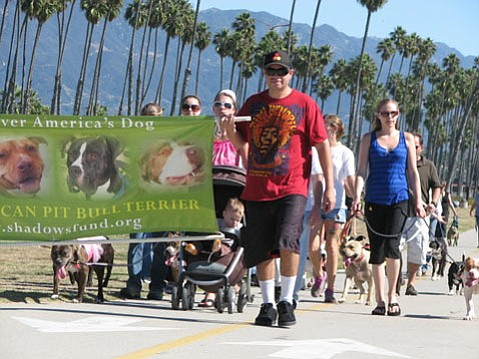 Pit Bull Parade