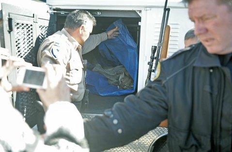 Mountain lion capture (Jan. 7, 2013)