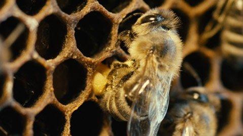 <em>More than Honey</em>