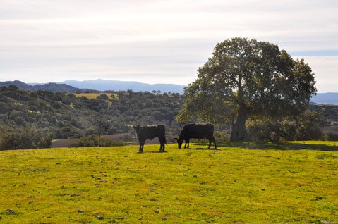 Zaca Ranch Cattle Co.