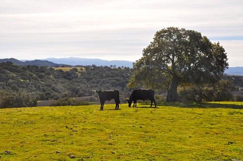 Zaca Ranch Cattle Co.