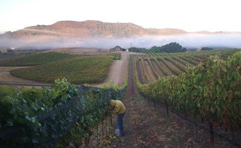 Ampelos Vineyard in the morning