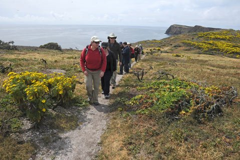 A team of biologists who've worked on Anacapa Island's restoration projects walk through a field of coreopsis plants