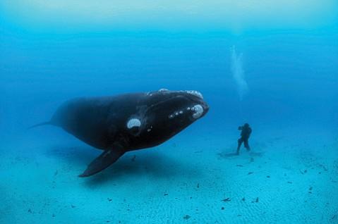 <em>National Geographic</em> photographer Brian Skerry presents <em>Ocean Soul</em>.