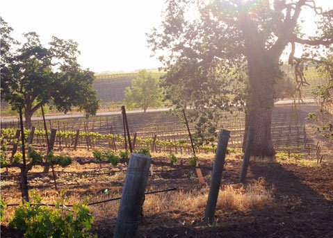 Sunrise at Chateau Margene on Paso Robles' eastside, home to quality cabernet sauvignon.