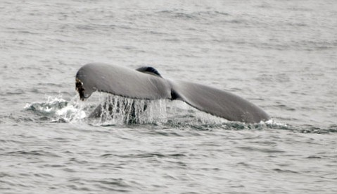 <b>GIVE 'EM HELL:</b>  High-intensity Navy sonar and explosives will be hard on marine mammals off Southern California.