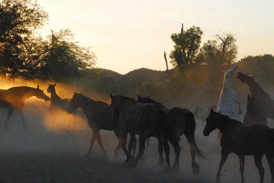 Frisky at sunrise, Tanque Verde