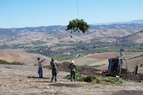 Authorities remove marijuana plants from private land