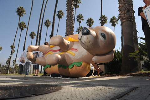 Mercy For Animals sets up near Stearns Wharf
