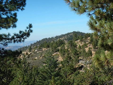 A view of the 6,600 ft. Pine Mountain.