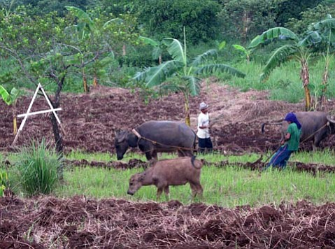 From water buffalo to farmers, life in the Philippines is a multi-generational family affair.