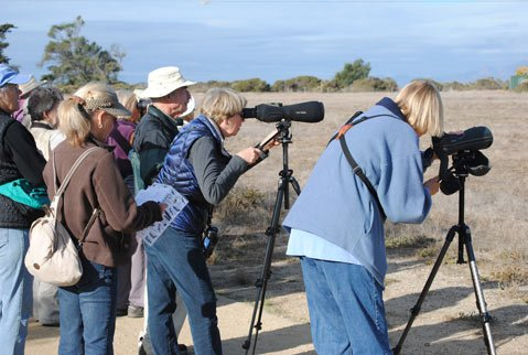 A Center for Lifelong Learning birding class groups around spotter scopes to get a better look at a red-shouldered hawk at Ellwood Mesa.