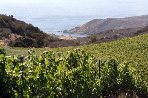 "<b>VINES WITH COASTAL VIEW: </b> With research showing that the climate of their Catalina Island property was much like the Russian River Valley in Sonoma County, the Rusacks planted about five acres of pinot noir, chardonnay, and a historic zinfandel vine from Santa Cruz Island. After years of struggle, they are producing great grapes, said Geoff Rusack, explaining, ""I can't believe we did this."""