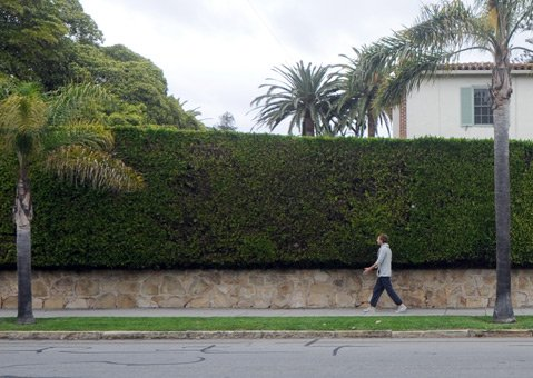 <b>BUSHY BARRIER:</b>  Go ahead and hedge your bets that walls of green won't be going away any time soon.