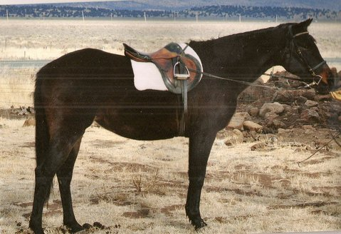 Feather, one of the horses injured in the March 28 accident on Old San Marcos Road, required skin grafts to cover exposed bone and shredded tendons on her hind legs